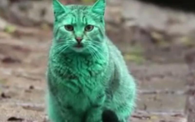 Bulgarie : le mystère du chat vert enfin résolu ?