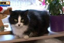 Insolite : Un chat a retrouvé ses maîtres après 1200 km !