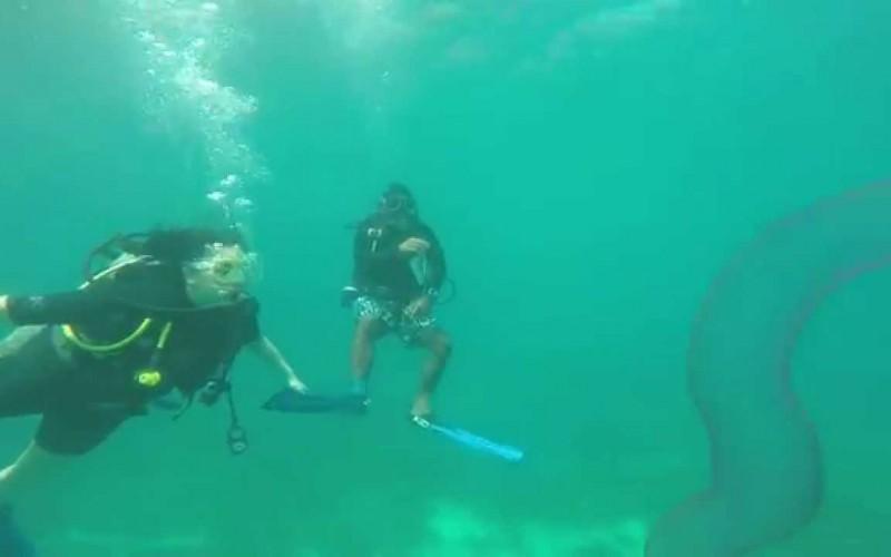 Une créature marine sortie tout droit du film Abyss