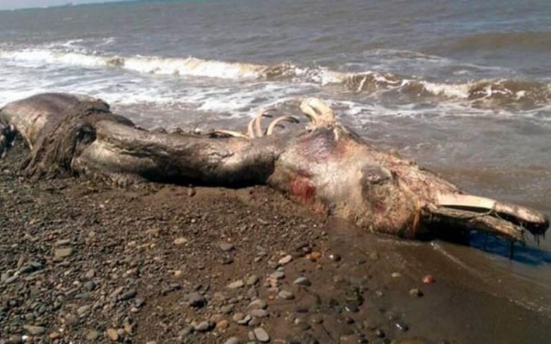 """Les restes d'un """"monstre marin"""" retrouvés sur une plage russe"""