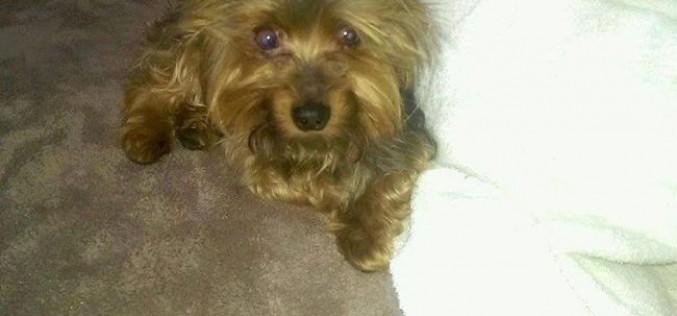 Volé en Guyane, le chien retrouve ses maîtres à 7000 km