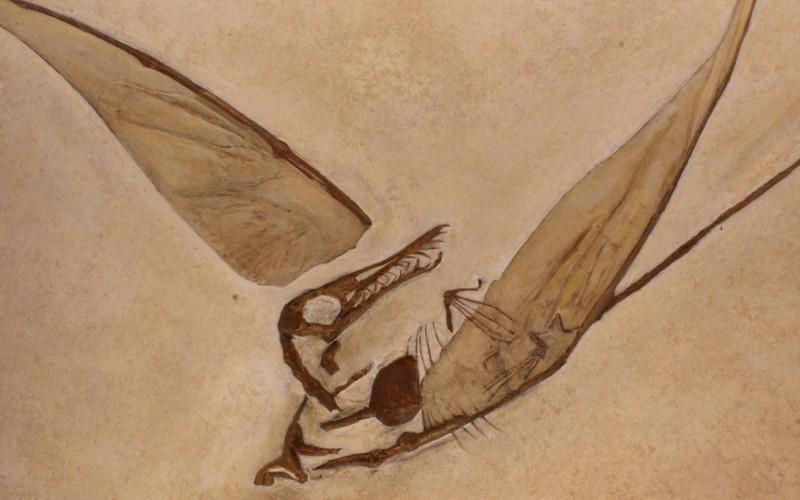 Un nouveau mystère autour d'un vomi de dinosaure ?
