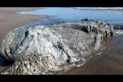 Une immense bête inconnue échouée sur une plage touristique