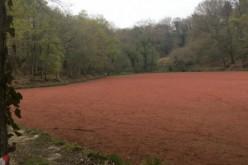 Le mystère de l'étang rouge