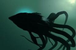 A la poursuite de Lusca, le monstre des Bahamas