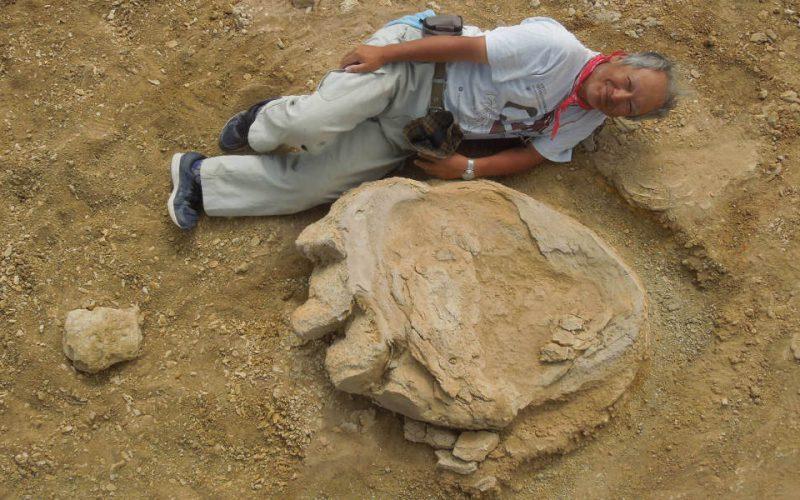 Une empreinte géante de dinosaure découverte en Mongolie