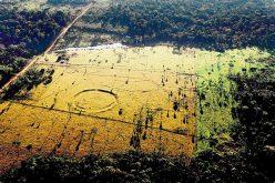 Une civilisation ancienne inconnue auparavant découverte en amazone