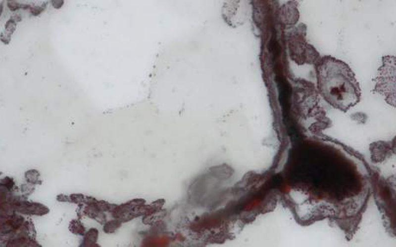 Découverte de la plus ancienne preuve de vie sur Terre