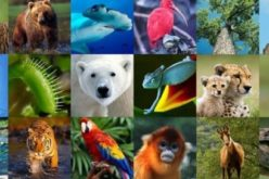 Evolution, vraiment ? Une étude génétique d'envergure révèle que 90 % des espèces animales sont apparues en même temps